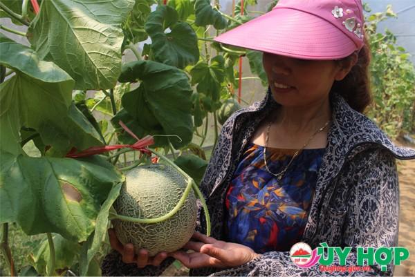 MO HINH DUA LUOI 2