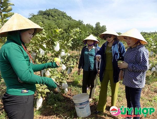 Chị em phụ nữ tìm hiểu trao đổi kinh nghiệm trồng ổi xen cam