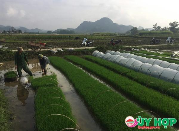LE HOI XUONG DONG 3