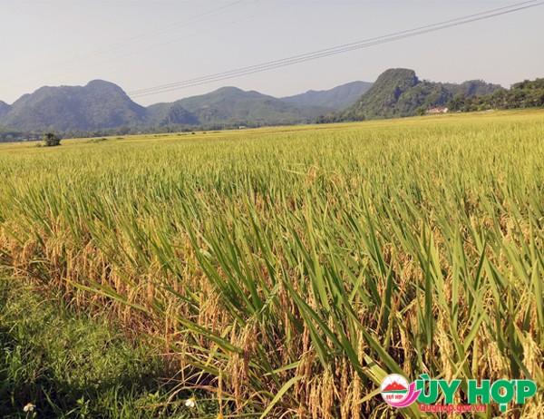 Chau thai 2