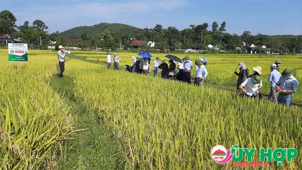 HOI THAO 1